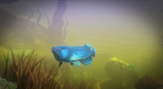 Alimentar e crescer peixes Baixar